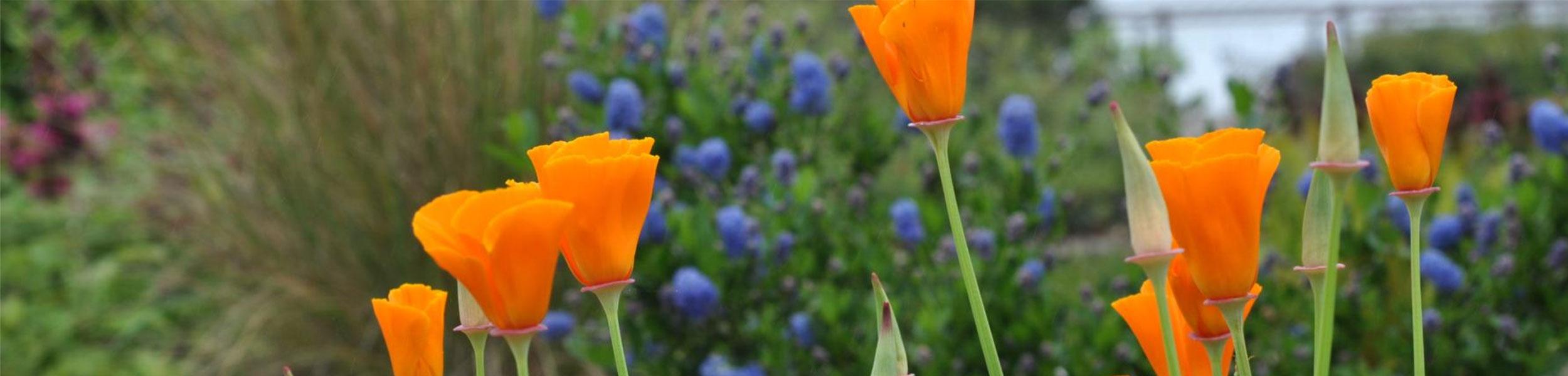 Humboldt Botanical Garden Summer Music Series- Lyndsey Battle