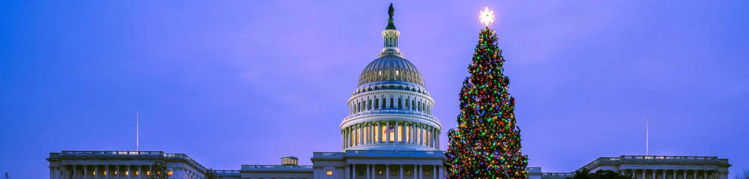 The U.S. Capitol Christmas Tree